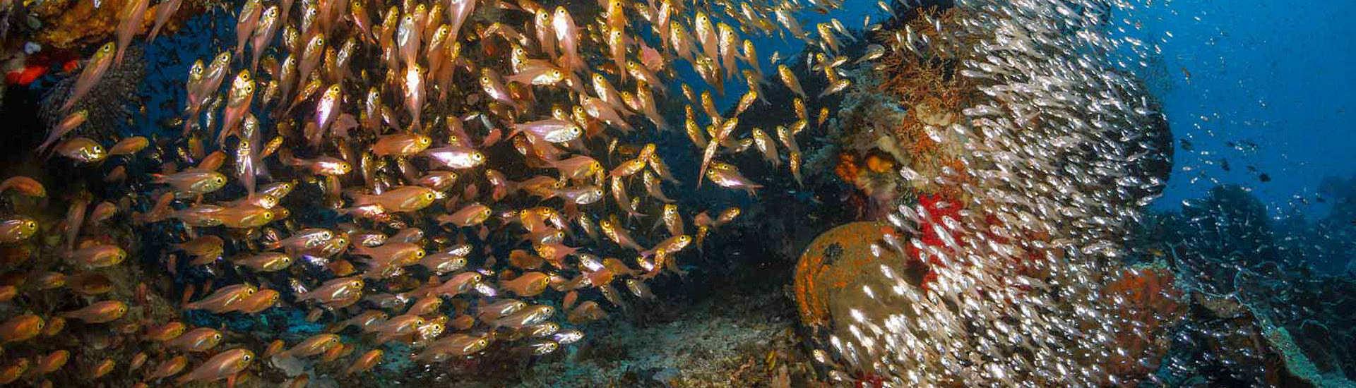 Riff bei Sali Kecil – Molukken, Indonesien