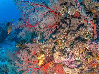 Korallengärten Japans