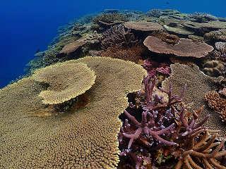 Korallen vor Kerama Island, Japan