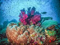 Korallen in Komodo