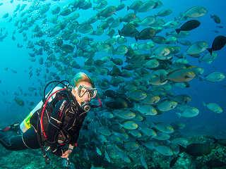 Komodo Nationalpark – Tauchen mit riesigen Fischschwärmen