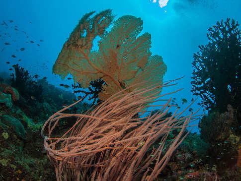 Korallenriff bei Lissenung Island