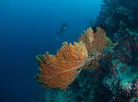 Korallenriff – Matrix, Lissenung Island
