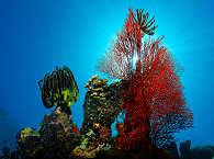Riff vor Bunaken – Bunaken Marinepark