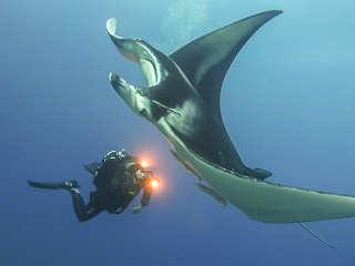 Manta beim Tauchen vor Toau – Franz. Polynesien