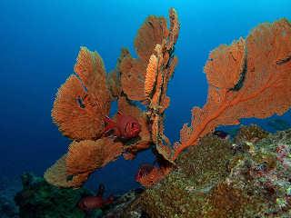 Unterwasserwelt im Norden Mauritius