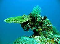 Korallengärten – Luzon und Mindoro, Philippinen