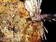 Muck Diving- und Critter-Paradies