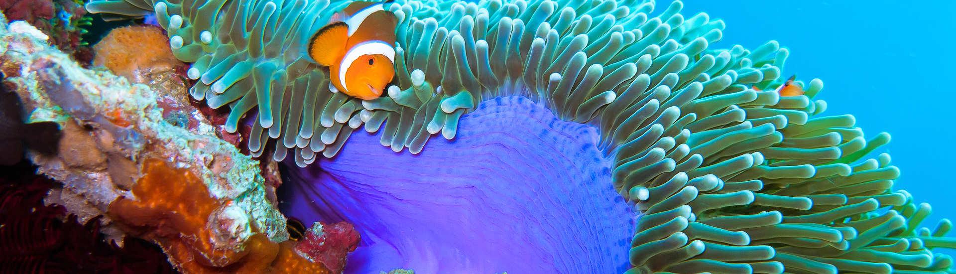 Nemo vor Negros