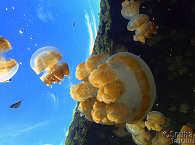 Jelly Lake Palau