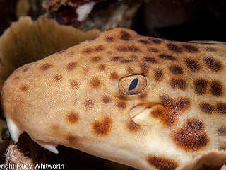 Tauchen mit Papua Paradise Divers