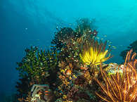 Korallen in Raja Ampat