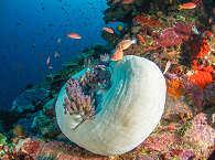 erstaunliche Korallen im Bunaken Nationalpark – Indonesien