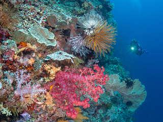 Steilwand bei Bangka, Nord Sulawesi – eines der schönsten Tauchgebiete in Indonesien