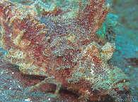Muck Diving – Lembeh Strait