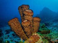 Unterwasserlandschaft Indonesien