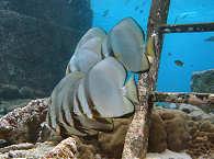 Tauchen im Selayar Dive Resort
