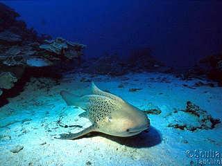 Tauchen um Yap – Mikronesien