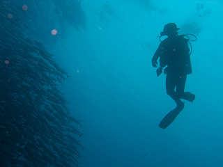 Große Makrelenschwärme in Bohol – Philippinen