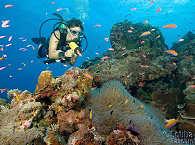Farbenfrohe Tauchgebiete um Yap