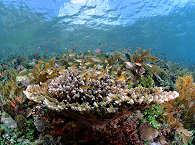 Korallengärten voller Leben