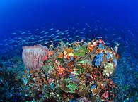 Tauchreisen in leuchtende Unterwasserwelten