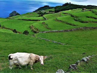 Tauchreisen Azoren – grüne Inseln im tiefblauen Atlantik