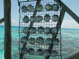 Perle des Südens – Fakarava, Französisch Polynesien