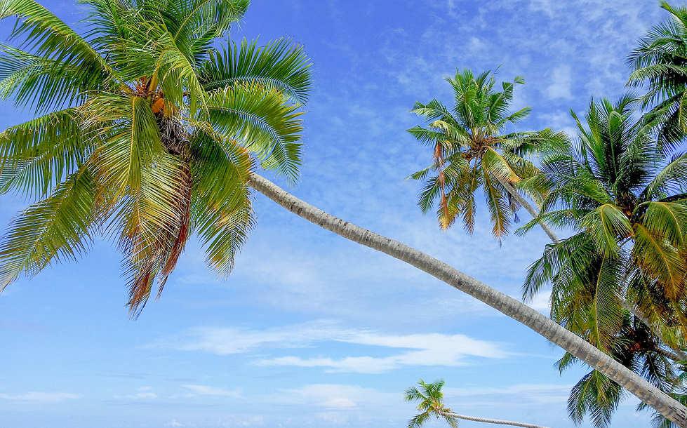 Tauchurlaub Malediven – Scuba Native Tauchreisen