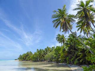 Tauchreisen Malediven – Urlaub unter Palmen