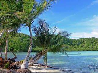Strand auf Carp Island – Palau