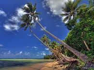 Palmenstrand auf Yap