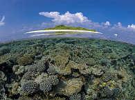Korallengarten – Tauchsafari Malediven
