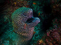 Netzmoräne – Tofo, Mosambik