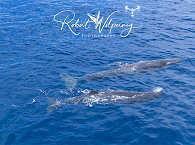 Azoren – Hotspot für Whale Watching